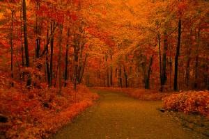 fall free wallpaper
