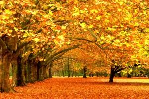 fall images wallpaper hd