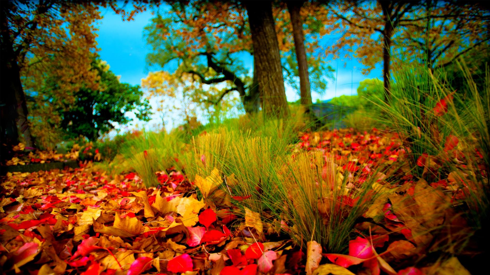 Fall Scenes Images Hd Hd Desktop Wallpapers 4k Hd