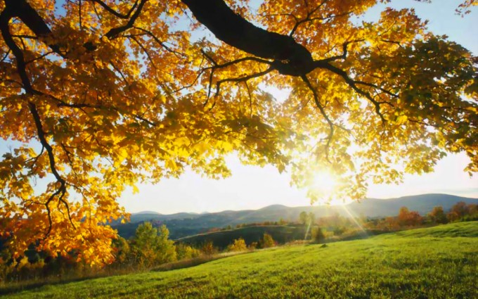 fall wallpaper sunshine