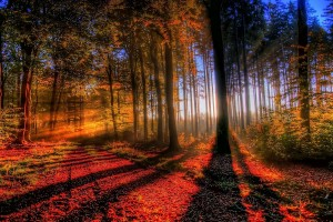 fall wallpaper trees