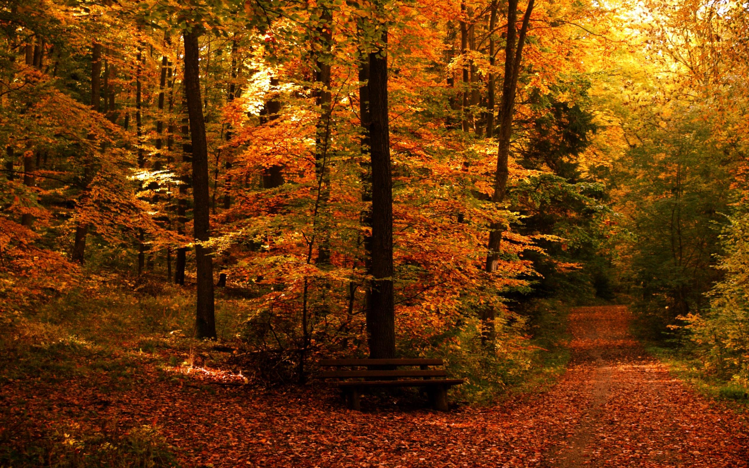 fall wallpaper trees beautiful