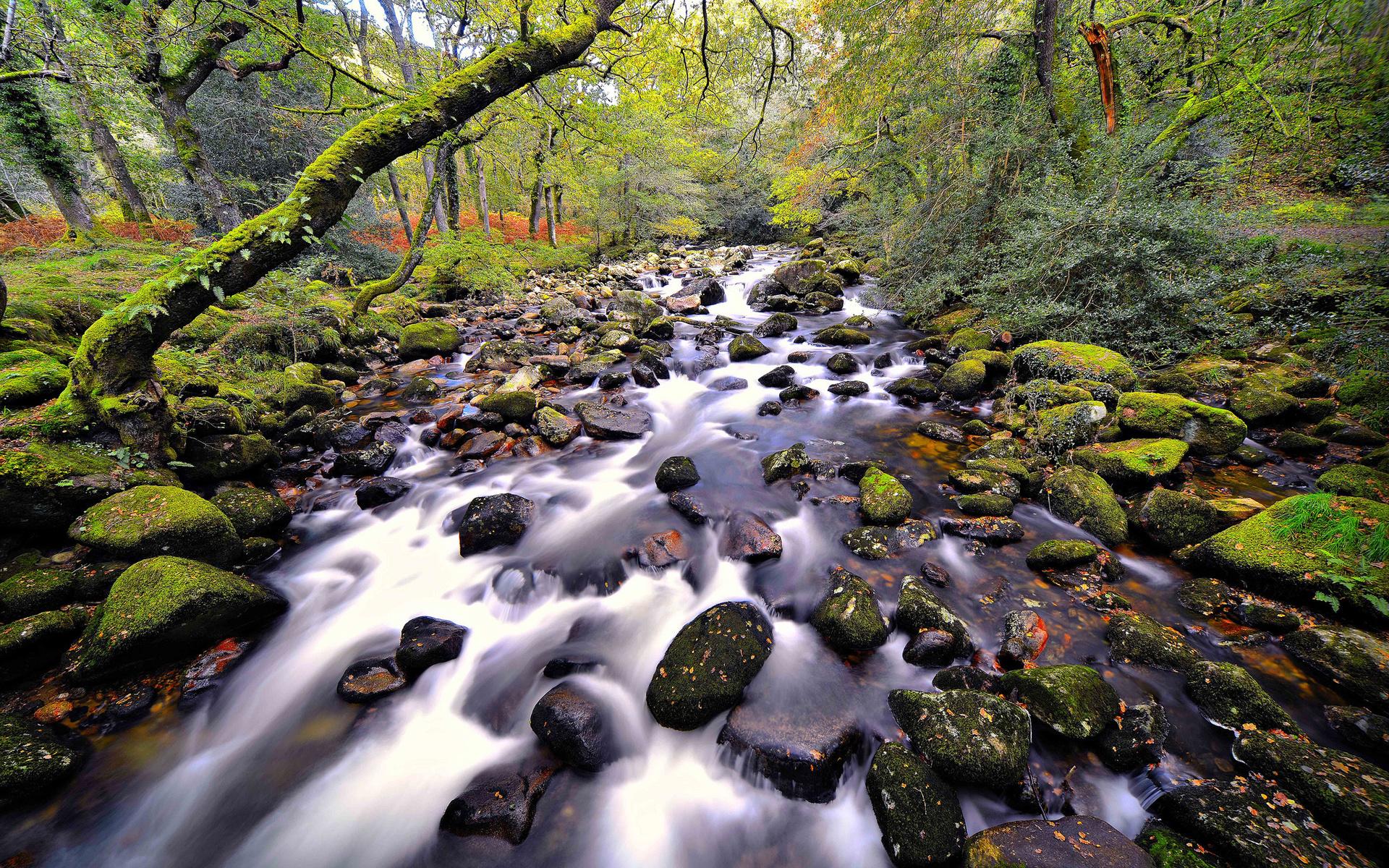 fantastic forest stream - HD Desktop Wallpapers | 4k HD