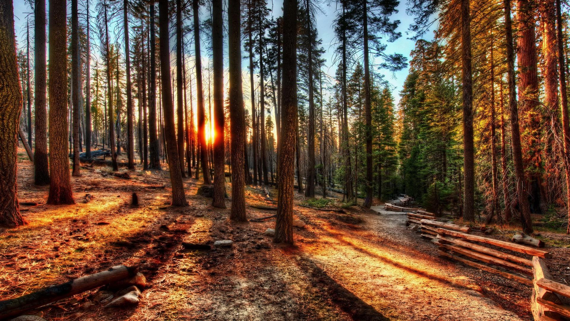 fantastic forest sunset