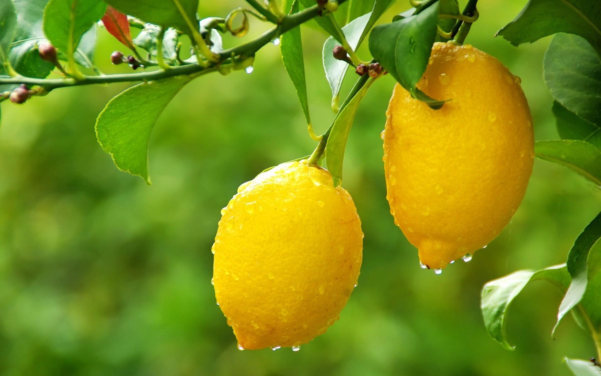 fantastic lemon