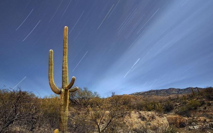 fantastic saguaro wallpaper