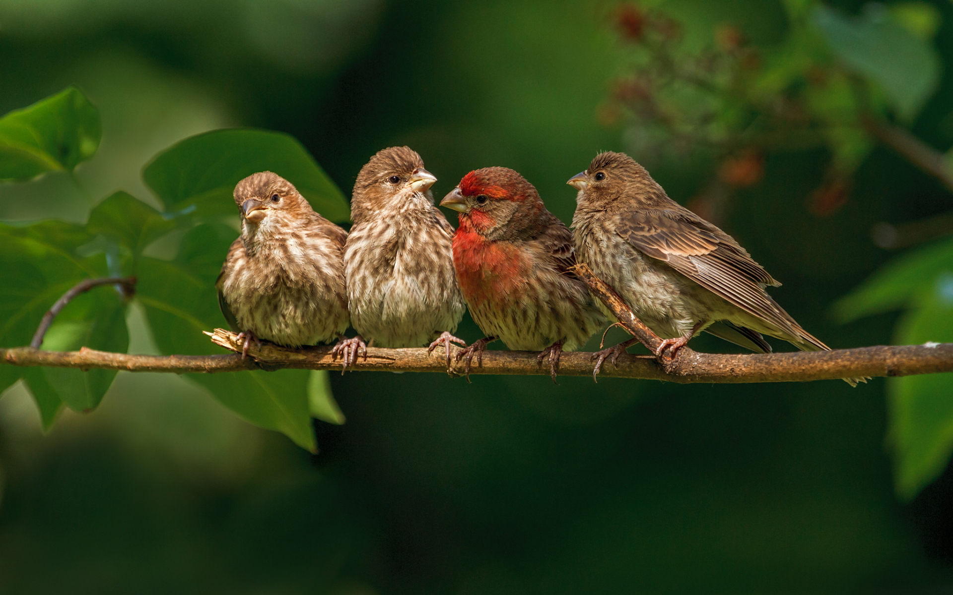 finches branch