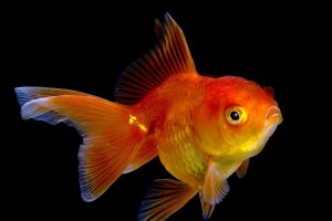 fish wallpaper download