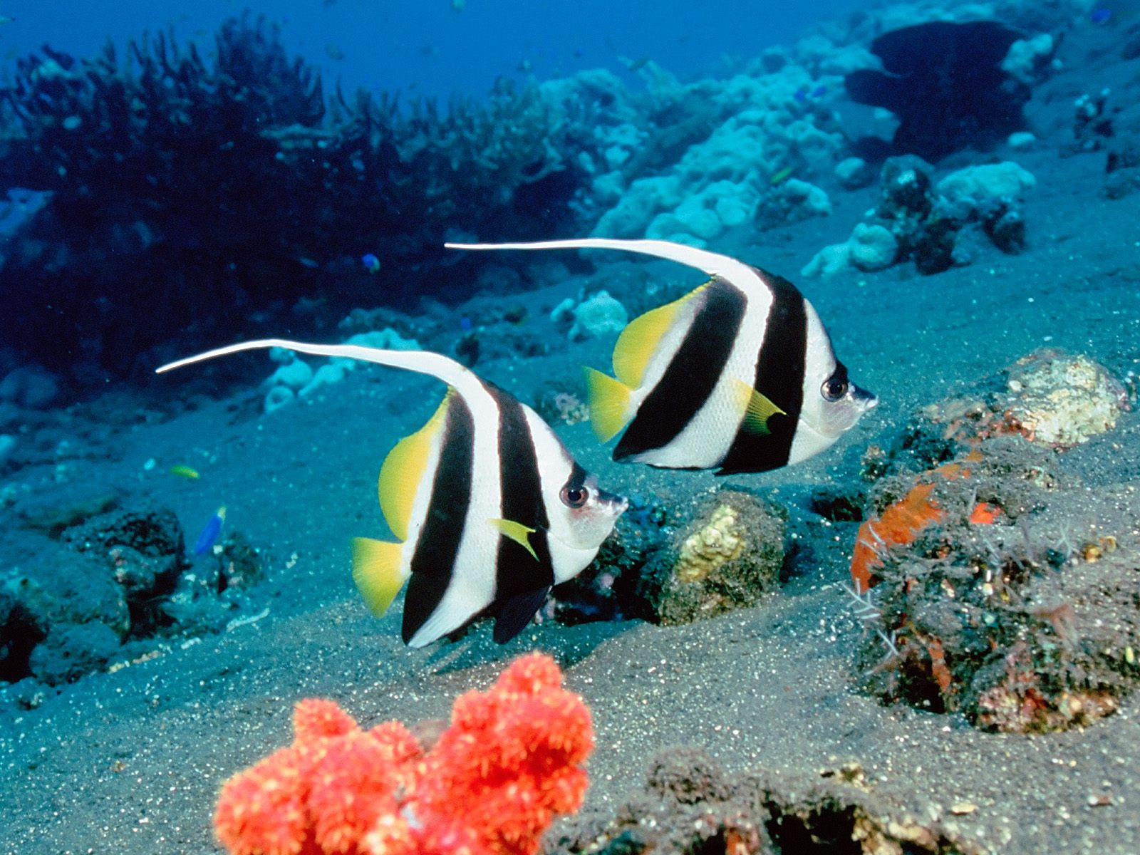 fish wallpapers