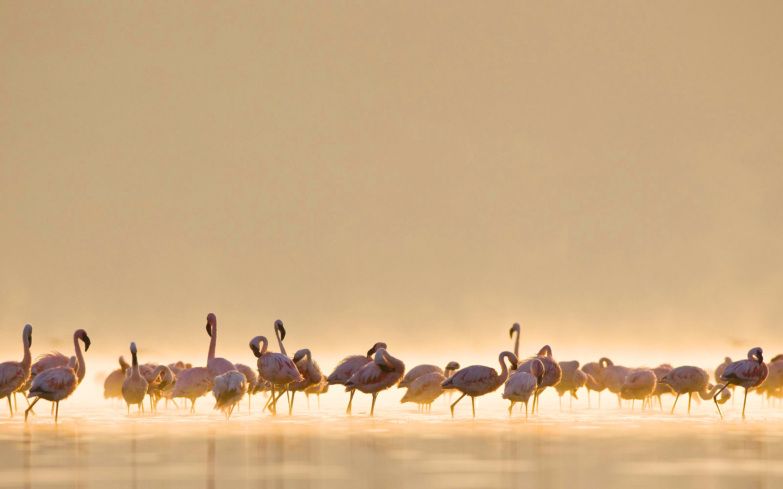flamingos birds breed