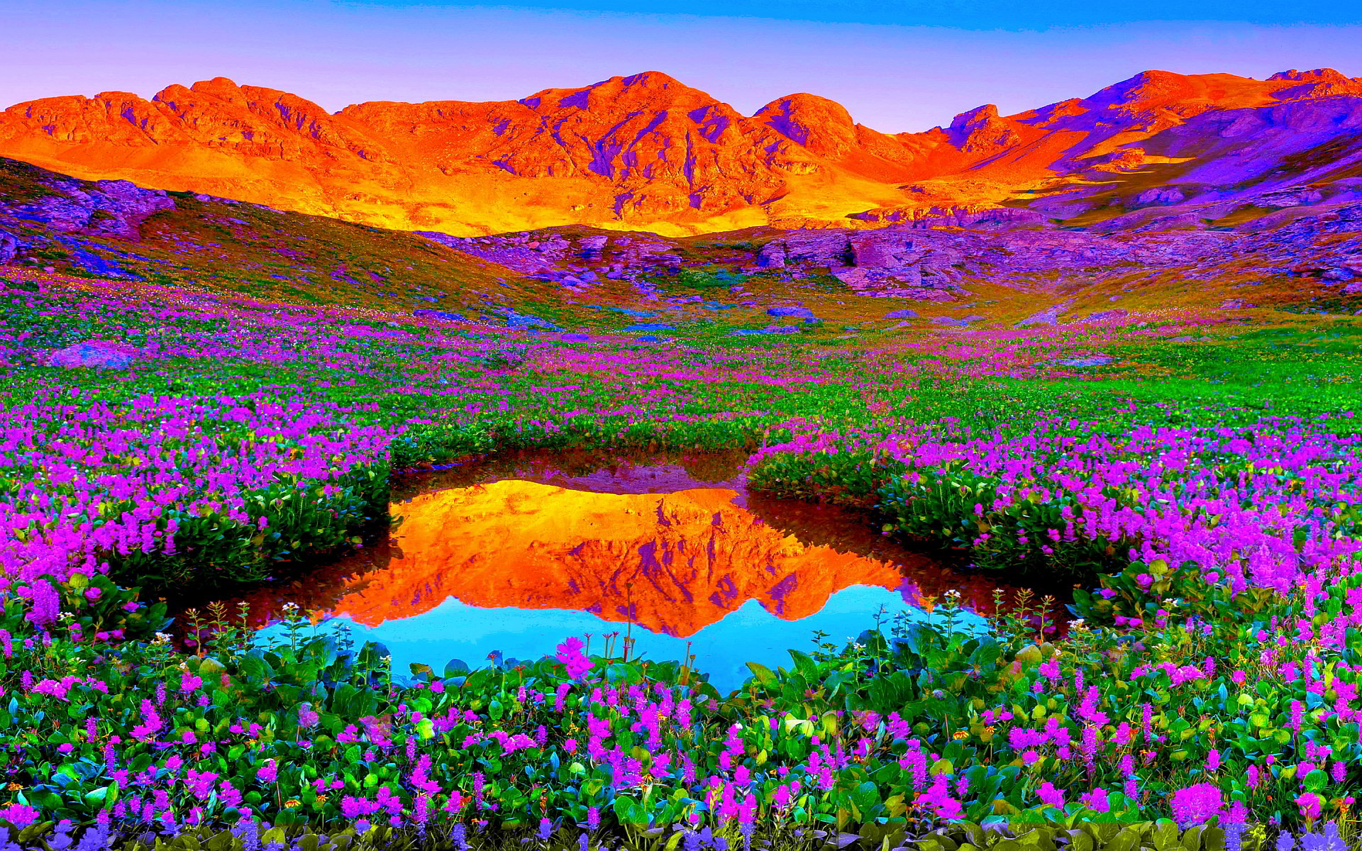 Flora And Fauna Hd Desktop Wallpapers 4k Hd