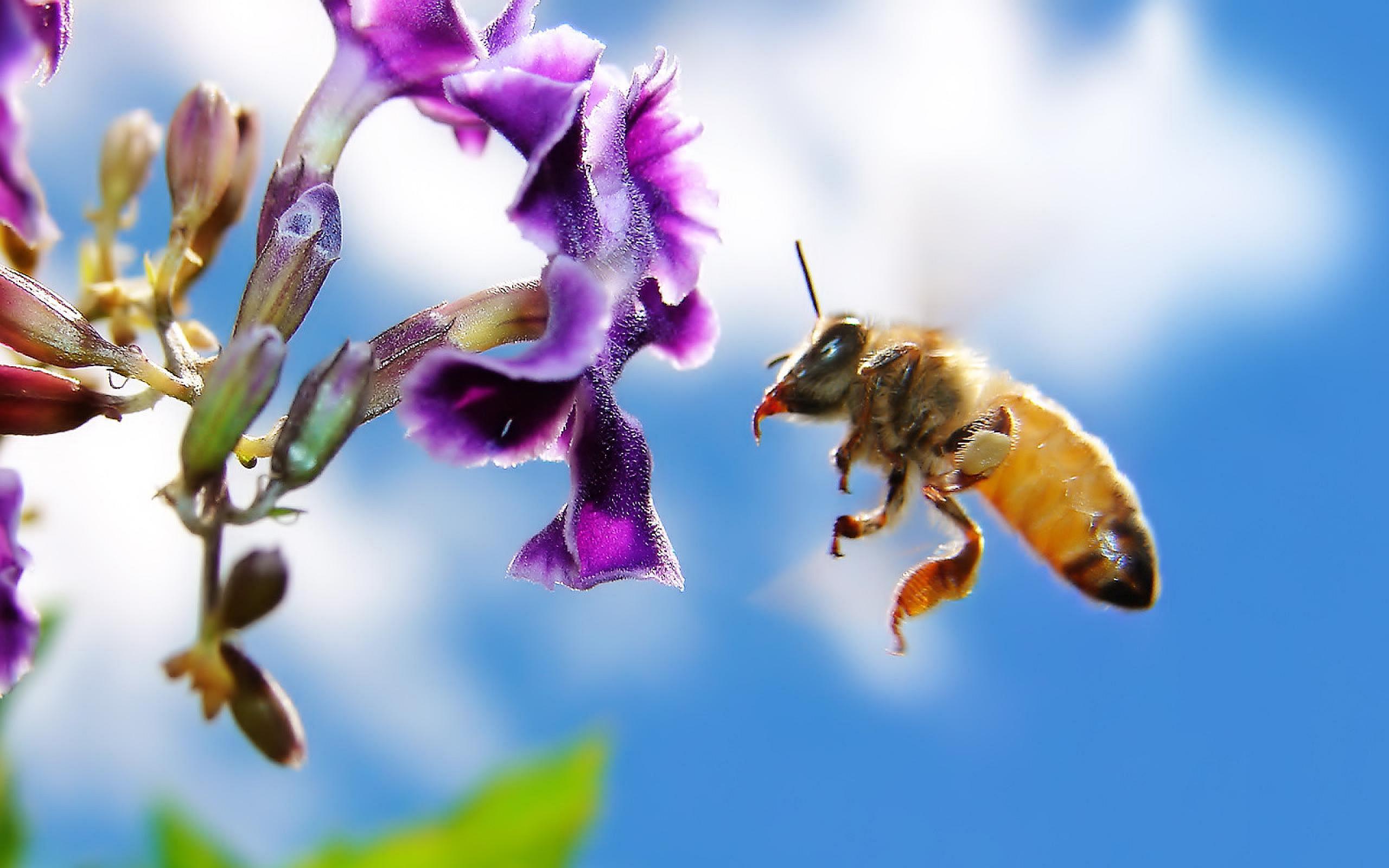 flower bees