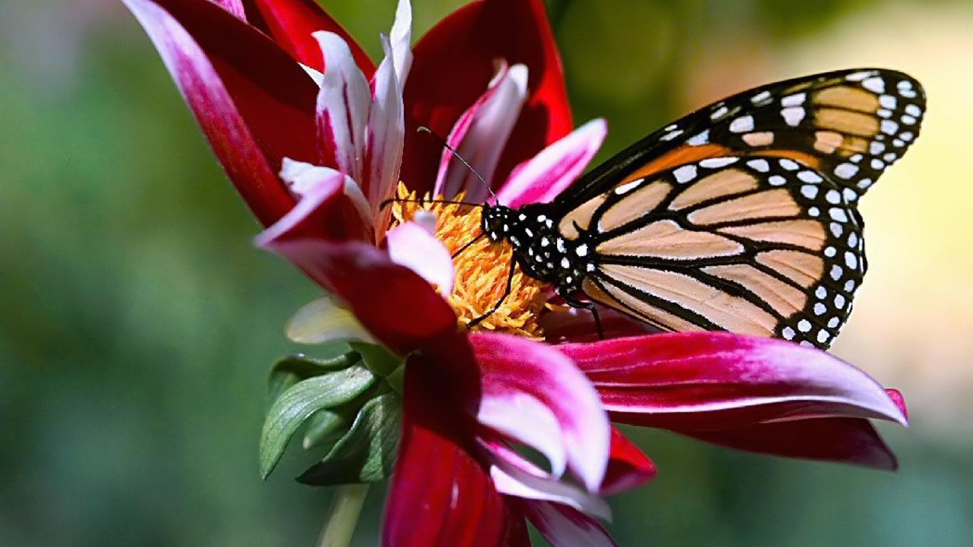 flower butterfly nature beautiful