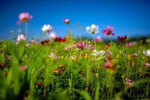flower field summer
