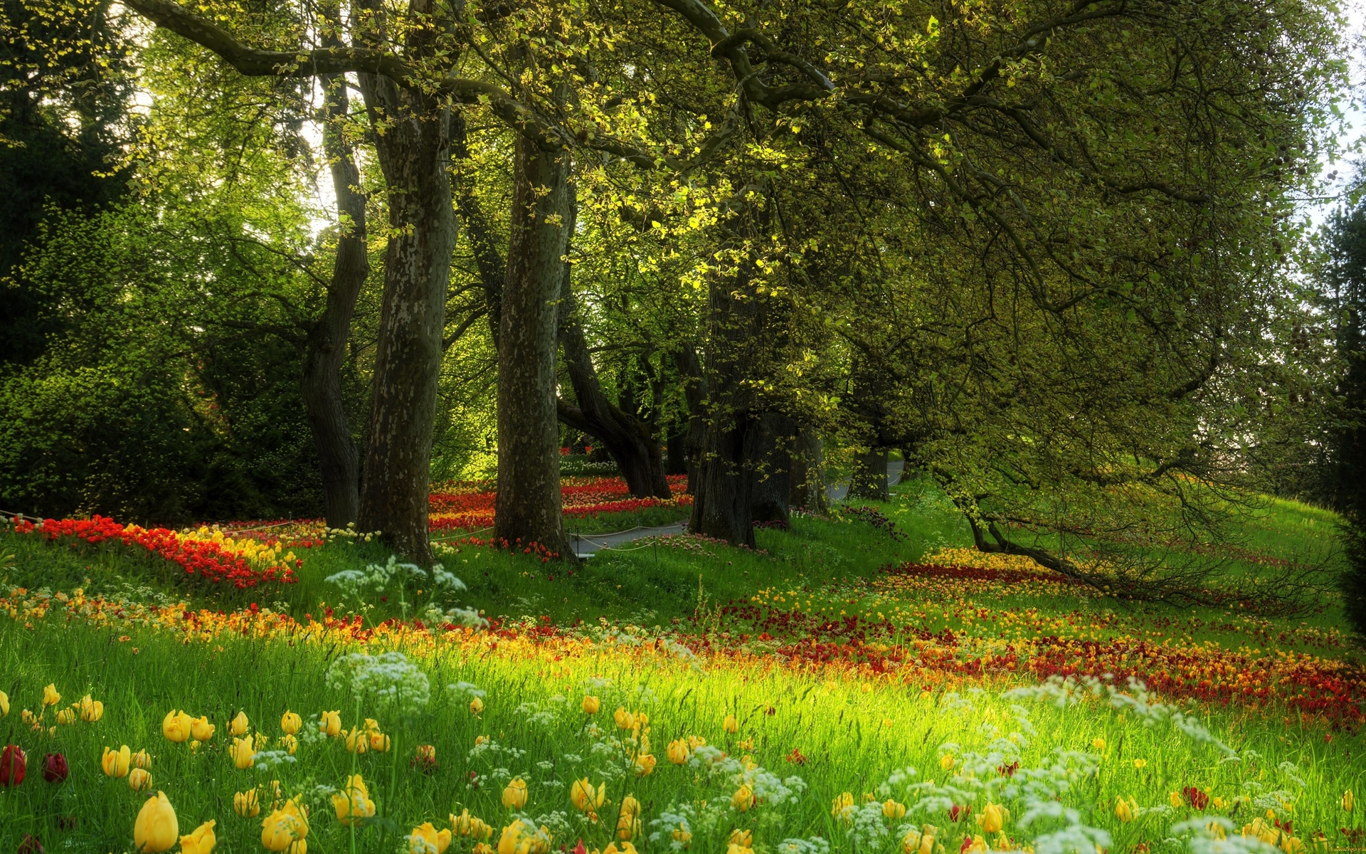 flower garden background - HD Desktop Wallpapers | 4k HD