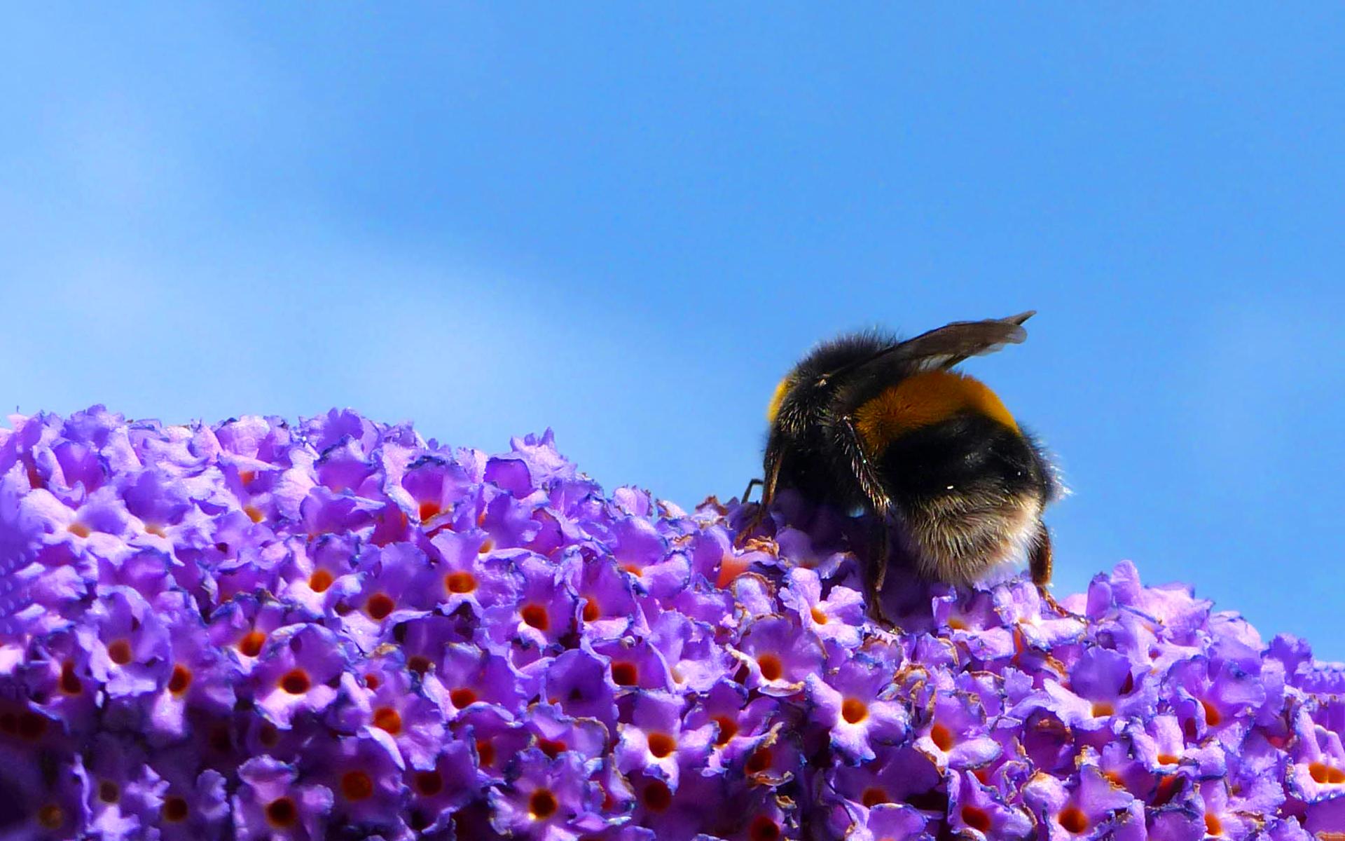 flowers wallpaper purple