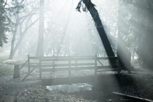 fog wallpaper free download