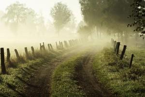 foggy winter wallpaper