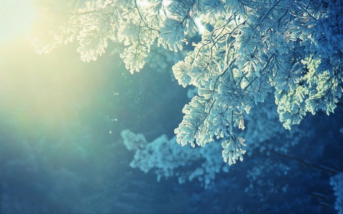 foliage wallpaper winter hd
