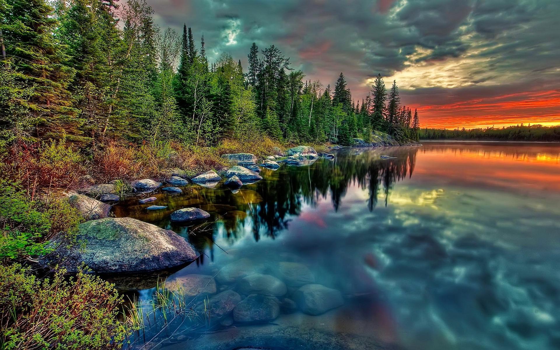 forest background images   hd desktop wallpapers 4k hd
