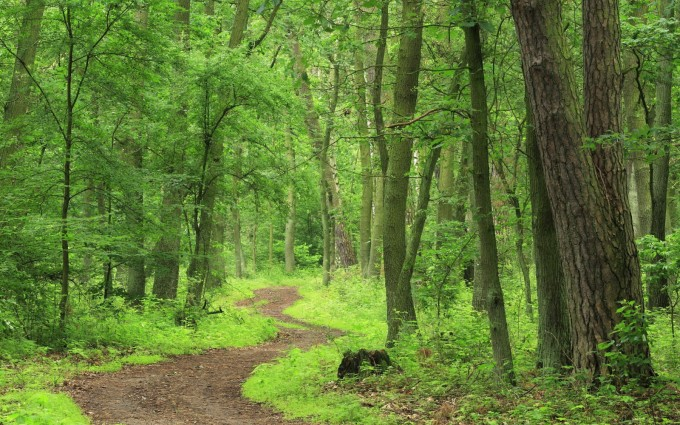forest backgrounds green