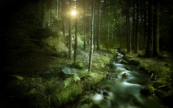 forest backgrounds sun