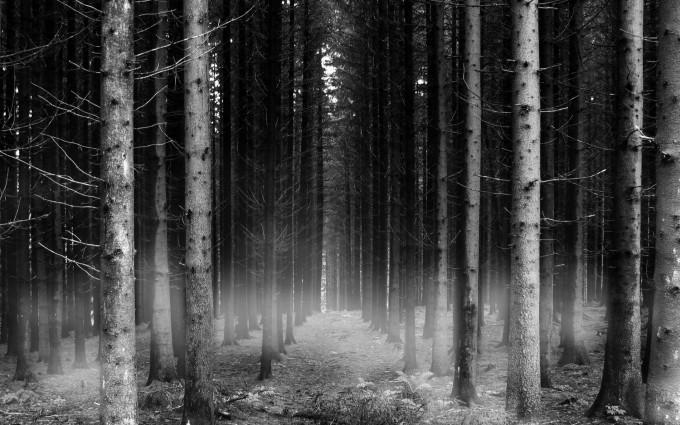 forest black background