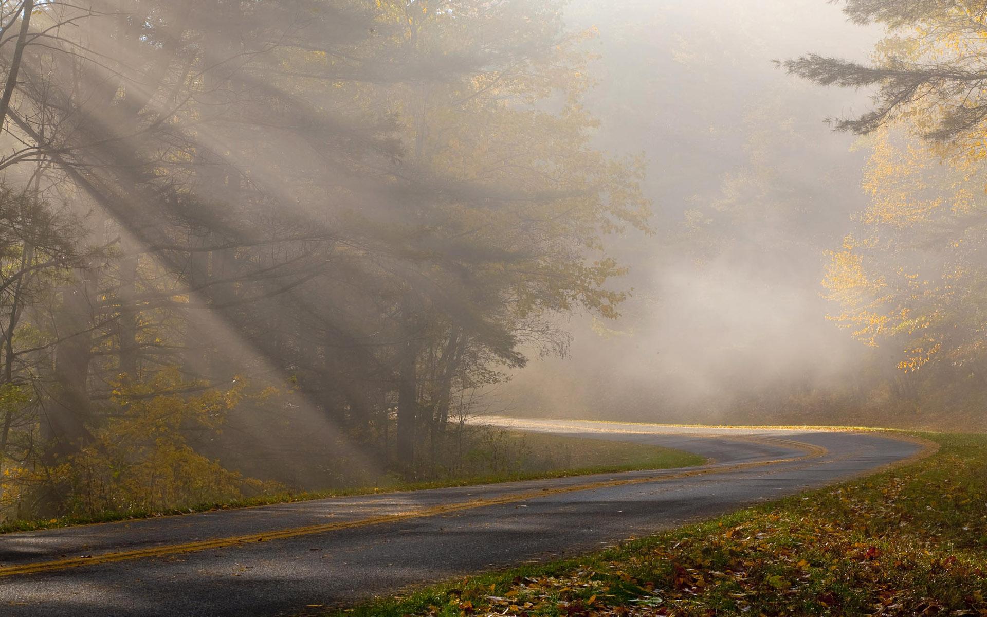Forest Foggy Road Hd Desktop Wallpapers 4k Hd
