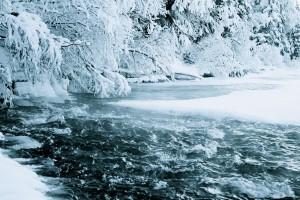 forest hd wallpaper frozen