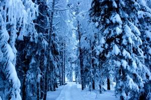 forest hd wallpaper snow