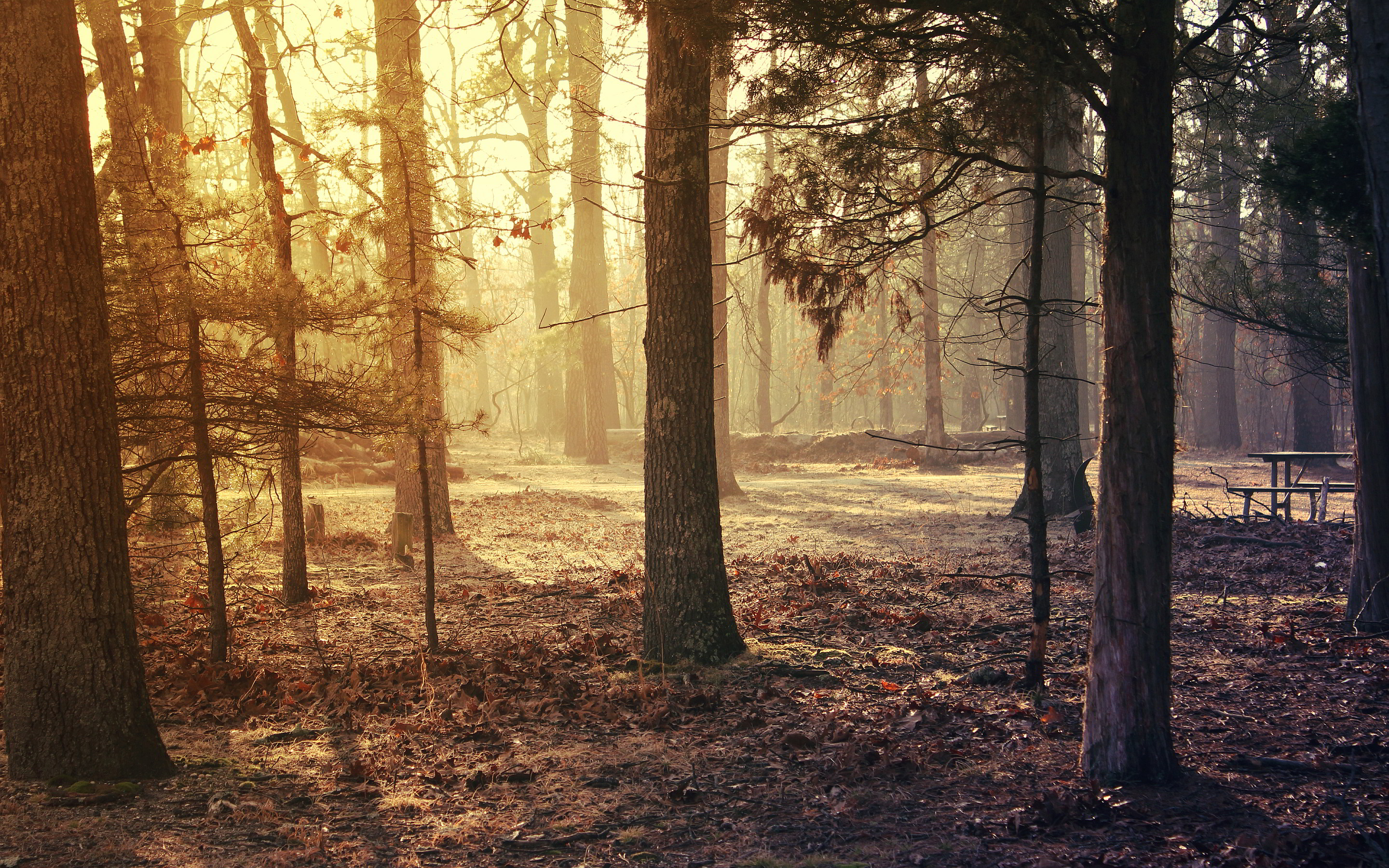 forest morning hd