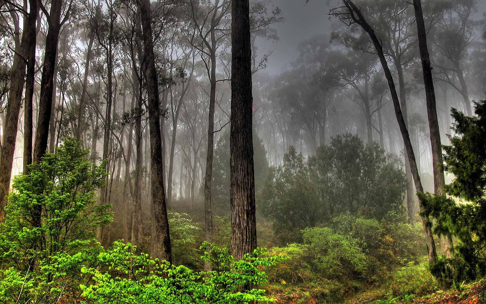 forest nature download
