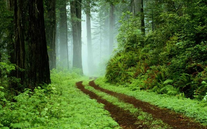 forest path wallpaper nice