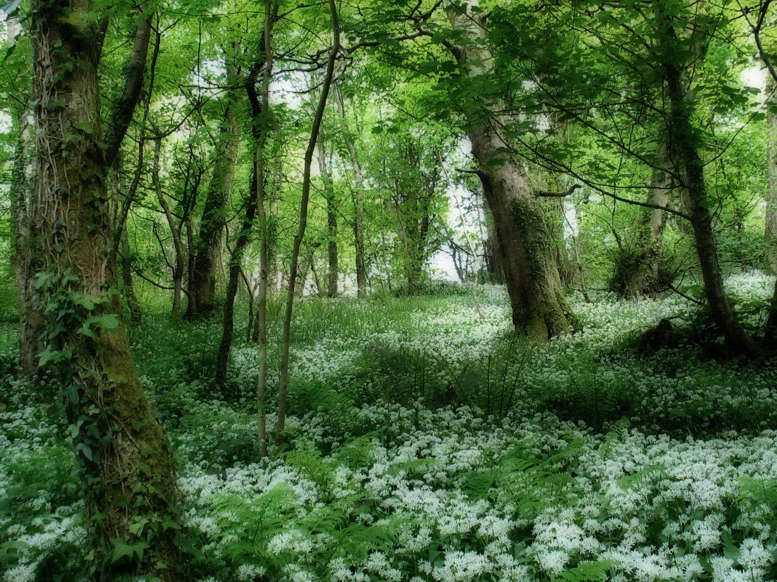 forest photos green