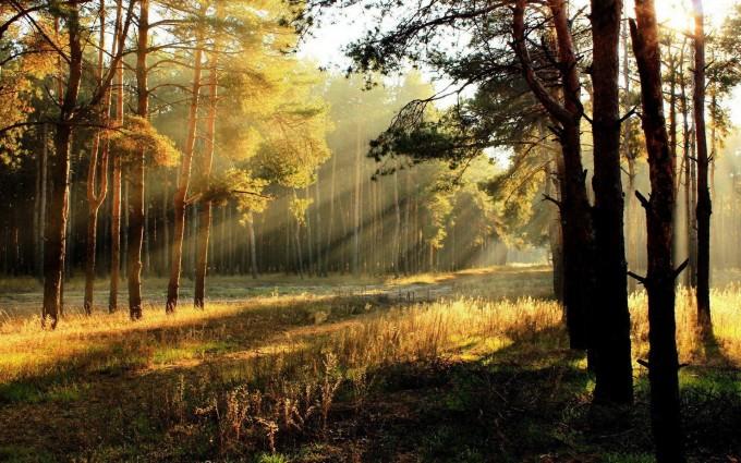 forest photos sun