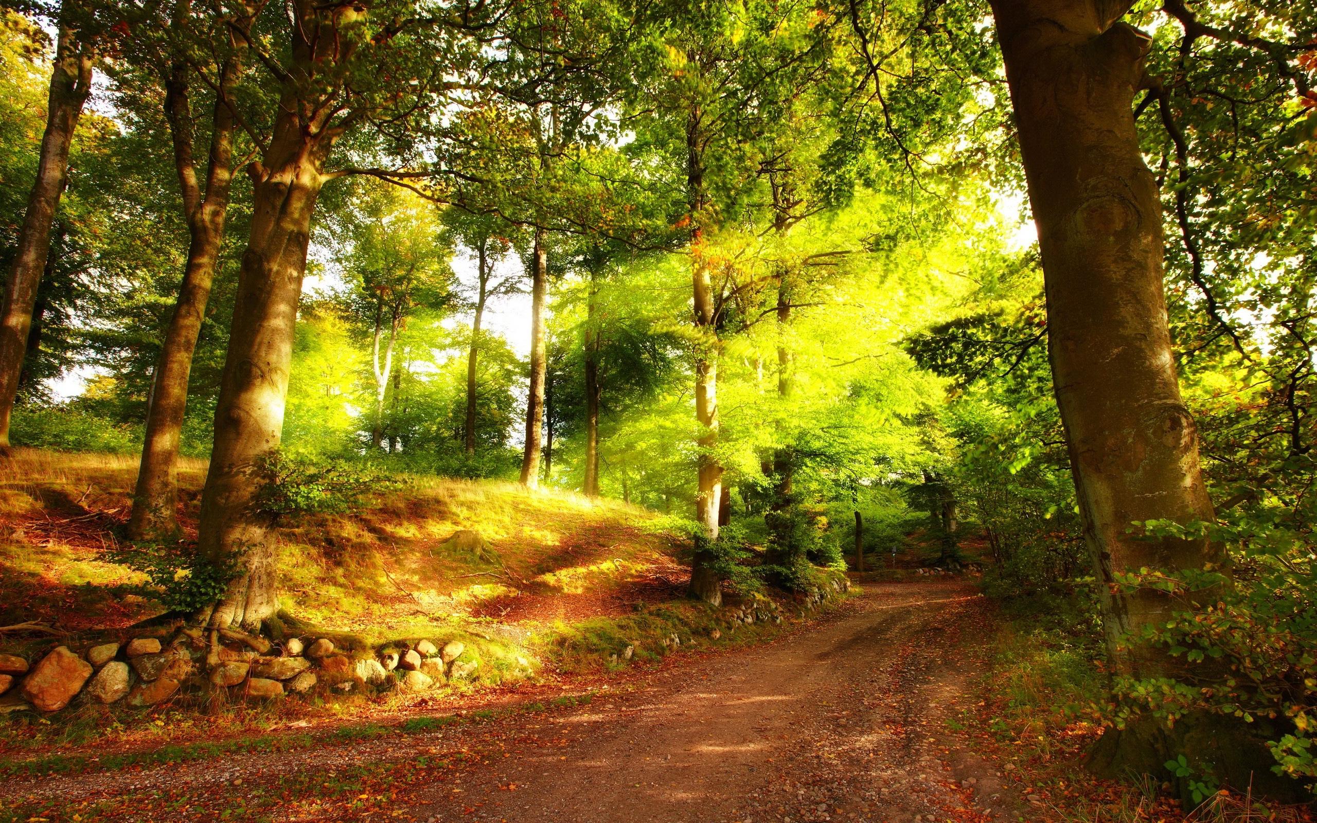 forest road hd desktop - HD Desktop Wallpapers   4k HD