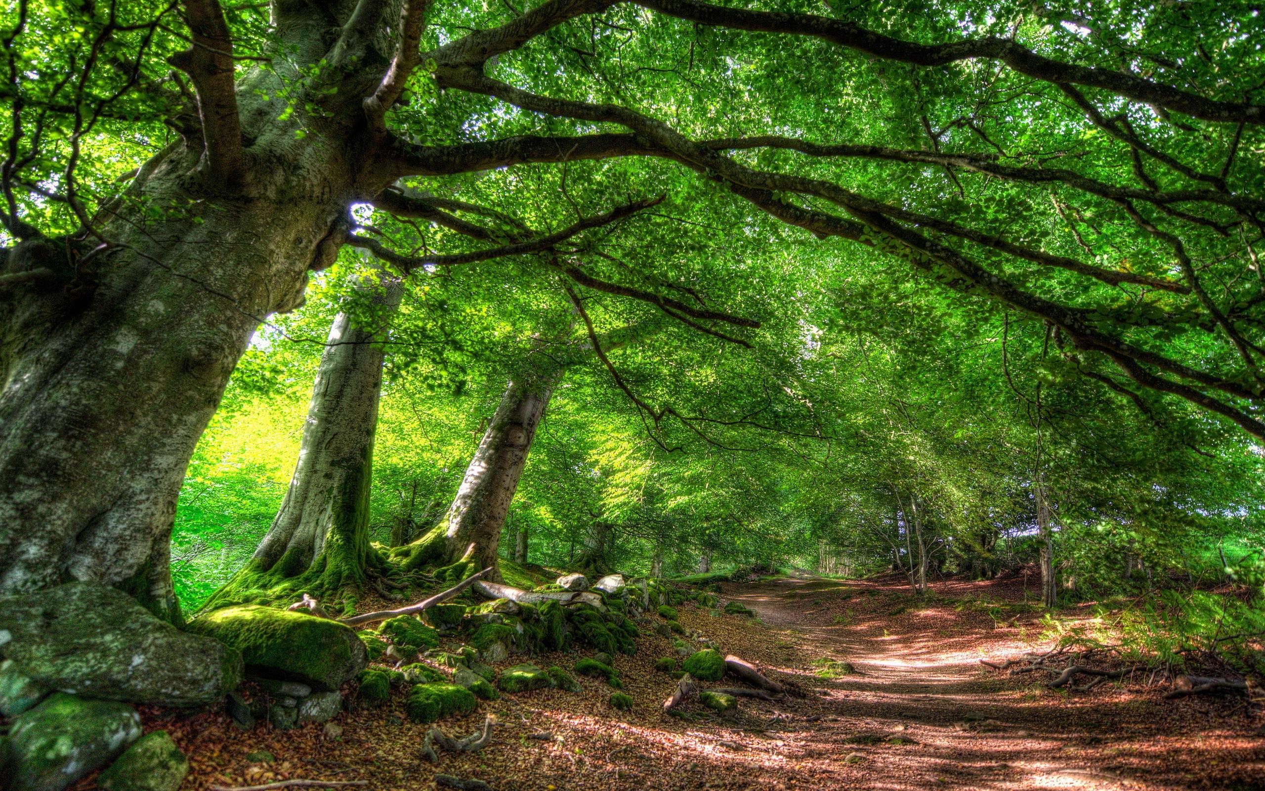 forest summer sunshine - HD Desktop Wallpapers   4k HD