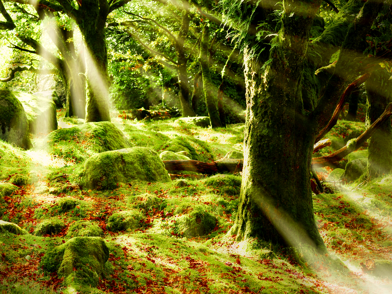 forest sun images