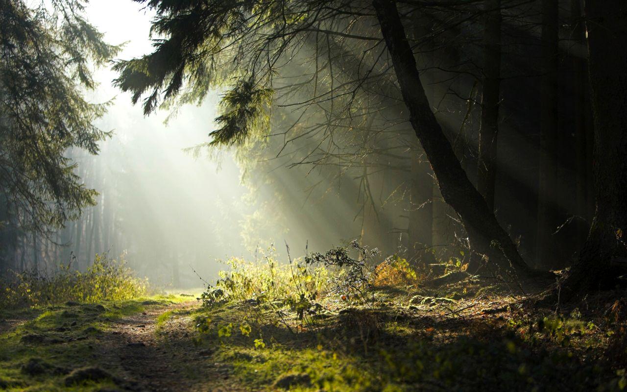 forest wallpaper landscape