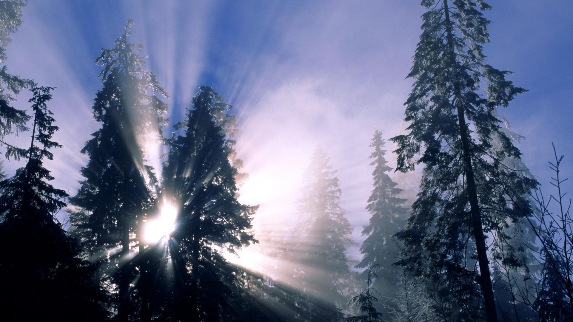 forest wallpaper love snow
