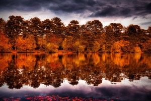 forest wallpaper red lake