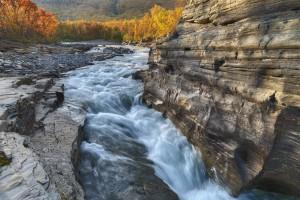forest wallpaper river