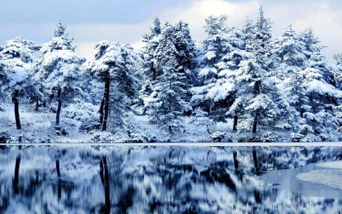 forest wallpaper snow winter