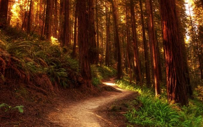 forest wallpaper widescreen