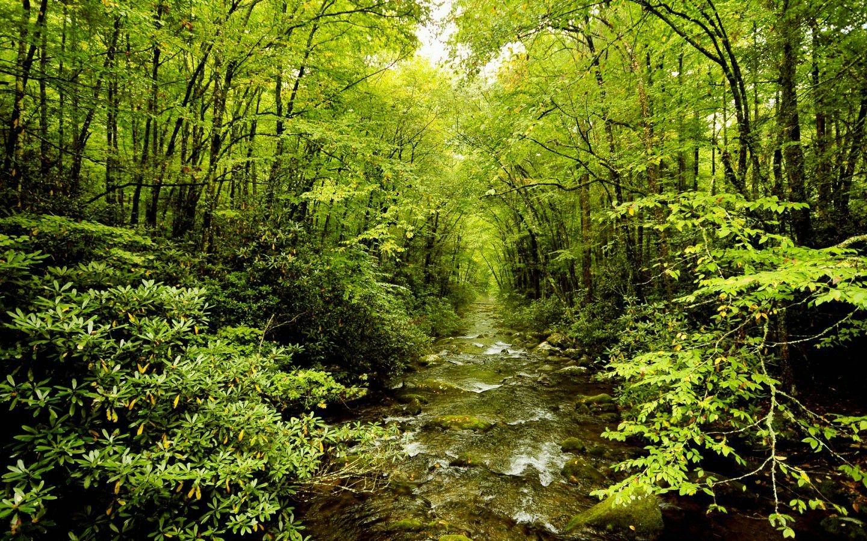 forest waterfall wallpaper stream