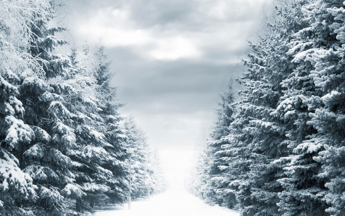 forest winter scenery