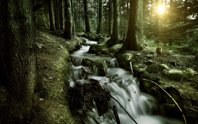 forests hd wallpapers