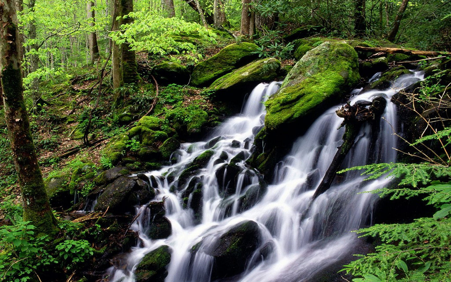 forests hd wallpapers waterfall