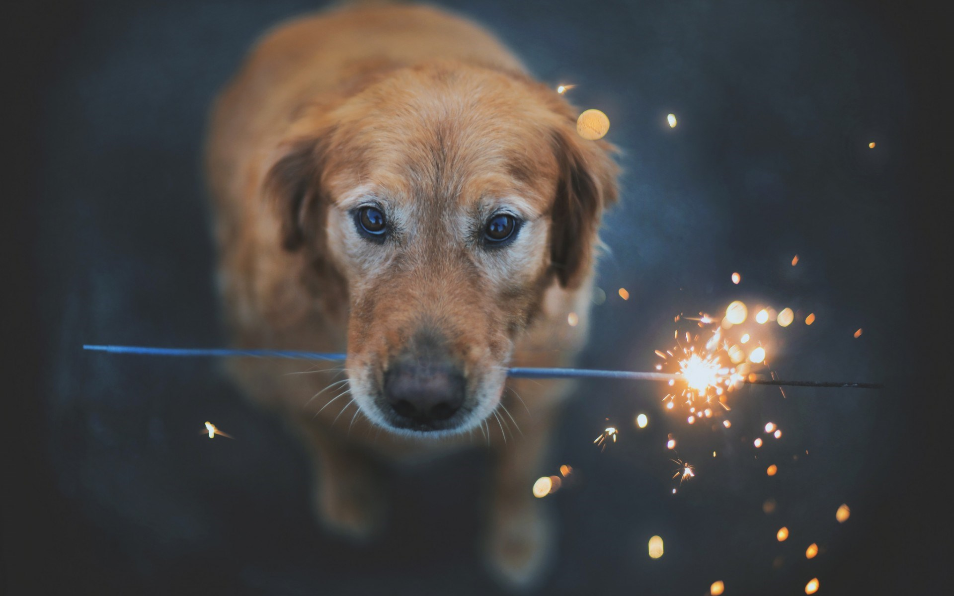 free dog images to download