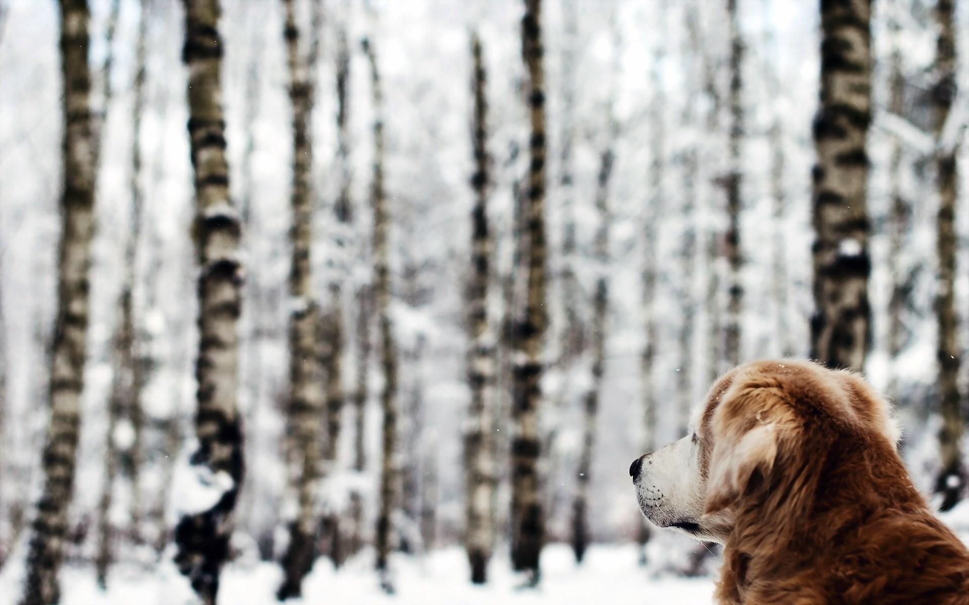free dog photos download